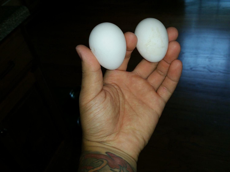 2nd & 3rd egg.