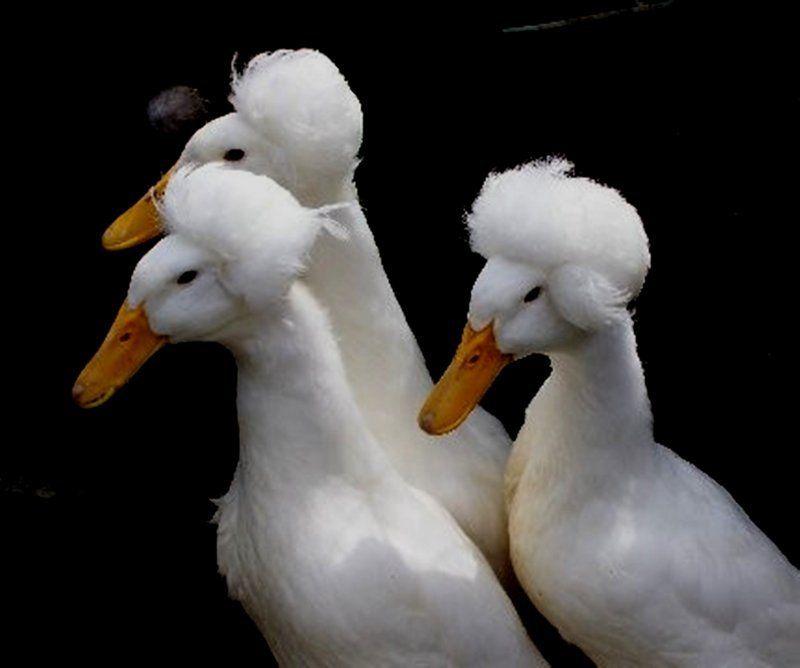 Personable, adorable ducks!