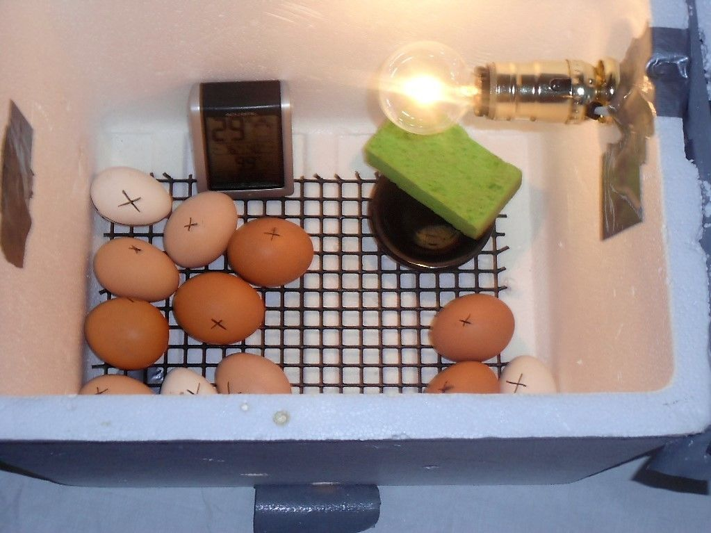 Coreenelane's photos in Home made incubator