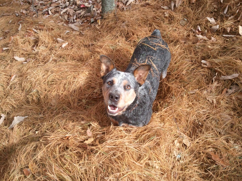 Greasydog26 profile picture