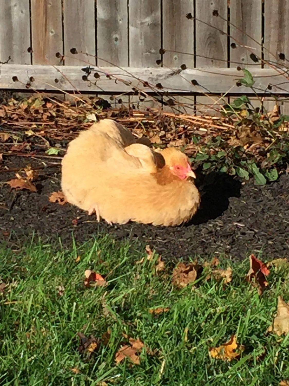 Lucky sunbathing.