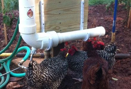 Chicken Fountain Automatic Waterer