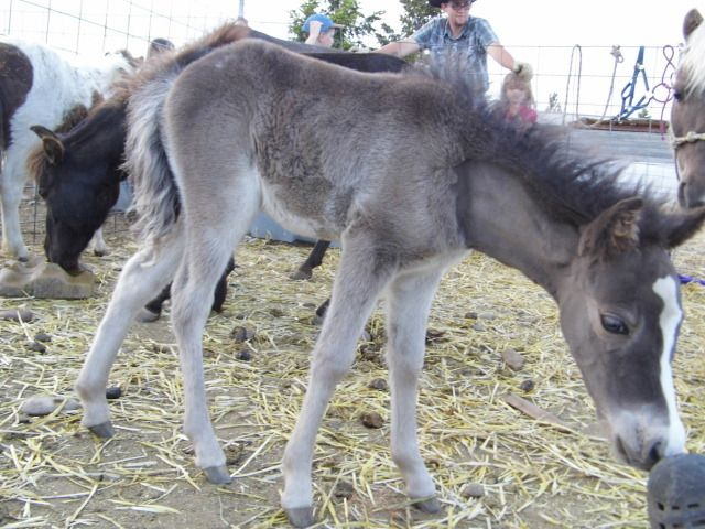 foals 2012 041.JPG