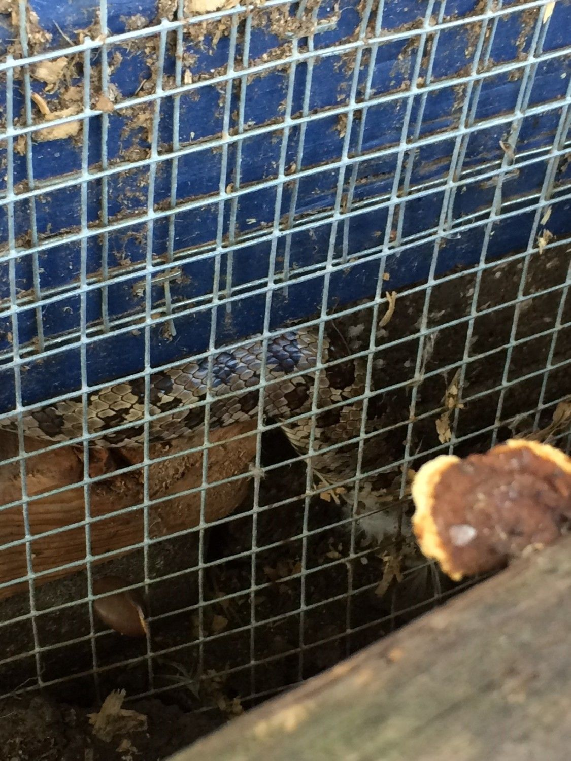unwanted guests in the coop