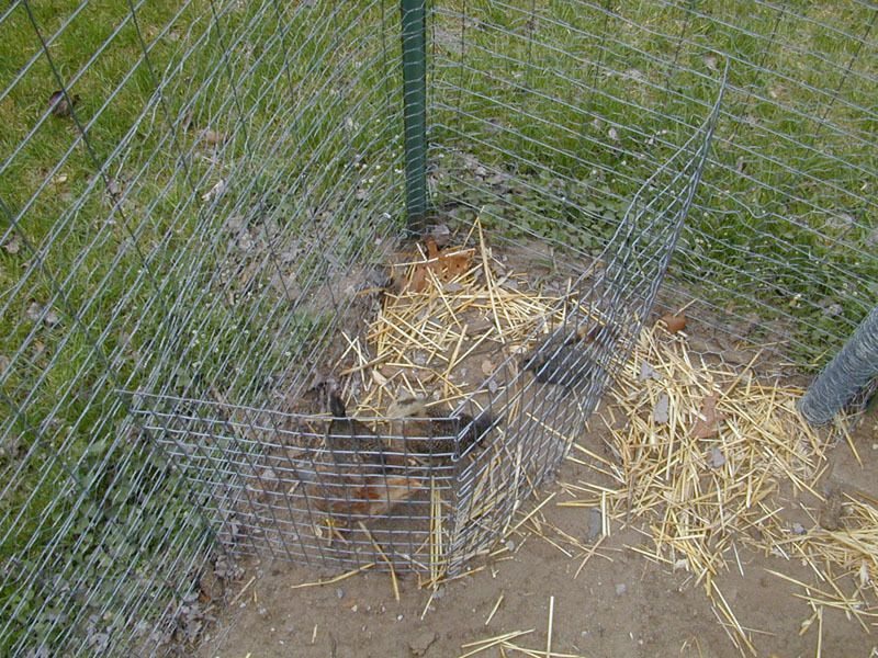 aart's Chick Corral