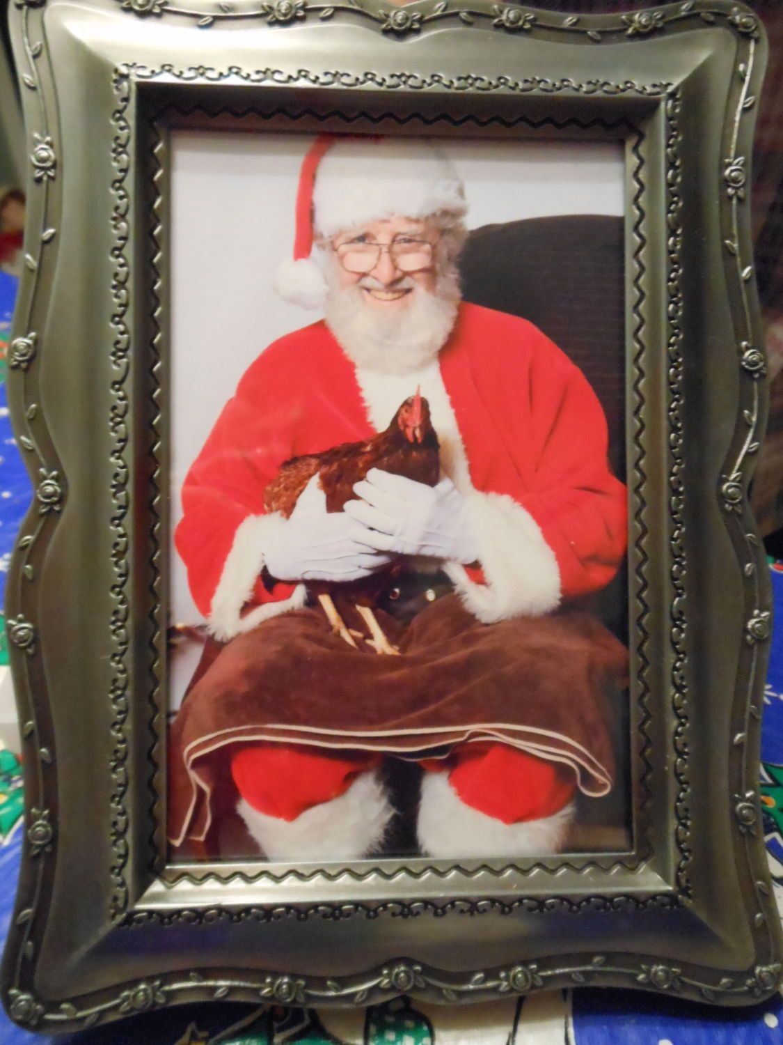 got this from Santa last year it was his first chicken