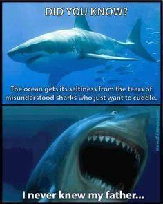 Shark tears.jpg
