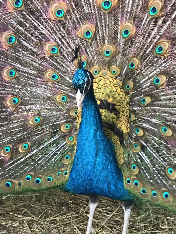 birdmanmax profile picture