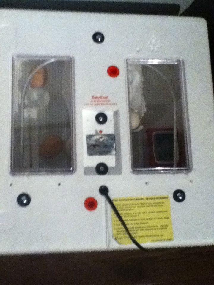 Incubators & Accesories