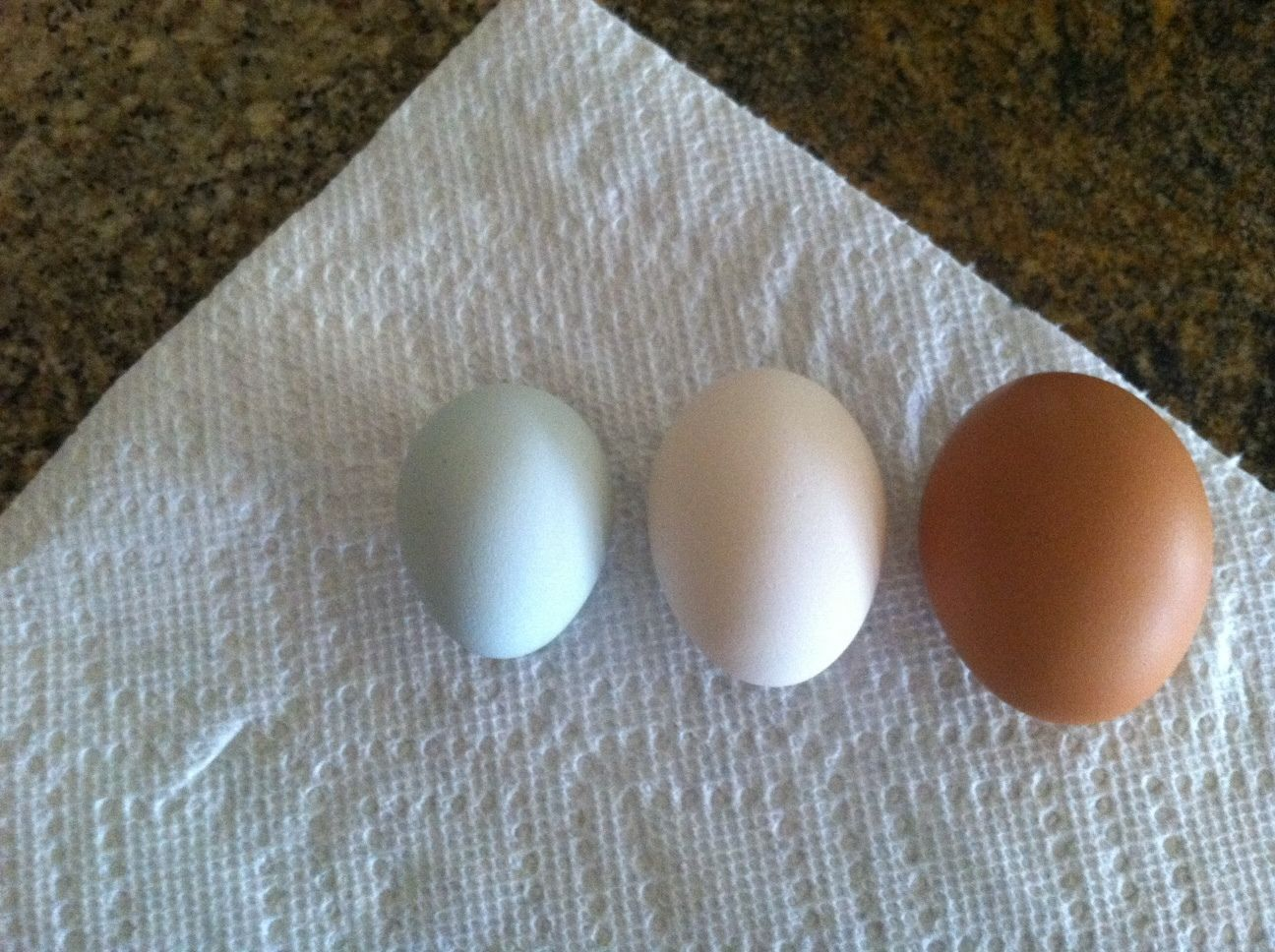 auntie hattie's photos in Who's Setting Eggs This Week[end]? [August 8-14]
