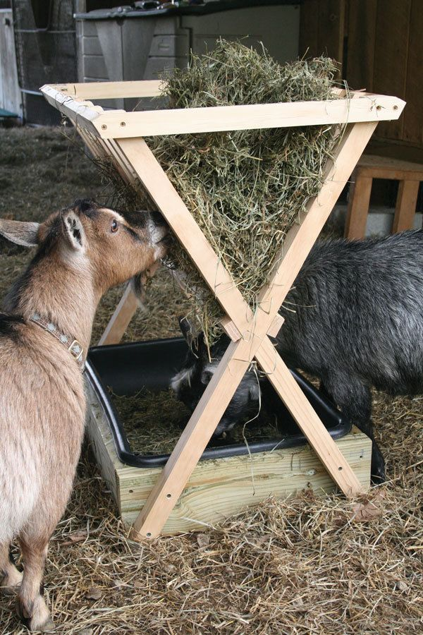 Kaitie09's photos in Nigerian Dwarf Goats wasting lots of hay---