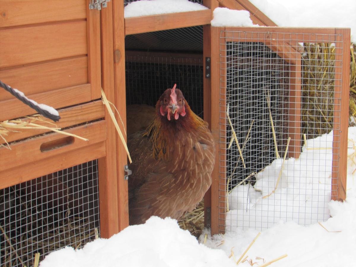 Lizardlicks's photos in Snow Bird