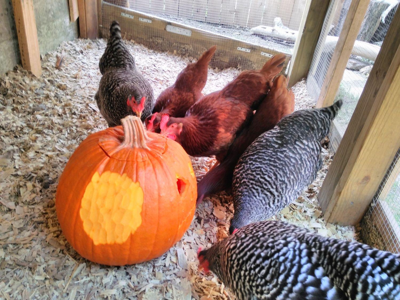 Girls love the pumpkins.