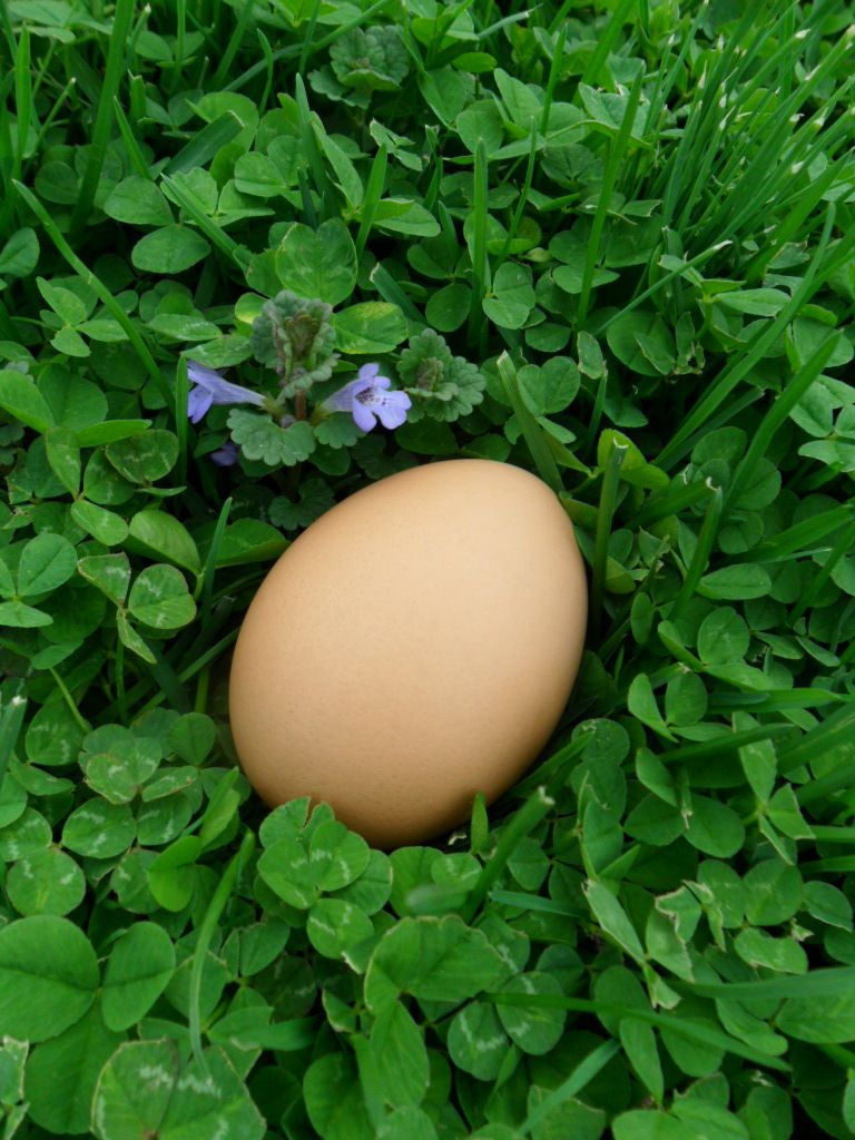 chickenpooplady's photos in Contest #6 Natural Egg Photo Contest - 2015 Easter Hatchalong