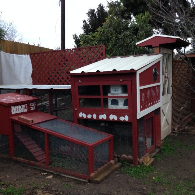Early 2015: The coop is done, the hens are moved in! Still working on enclosing the chicken yard with 6-8 ft high fences/trellises. Here one part is still a make-shift curtain.