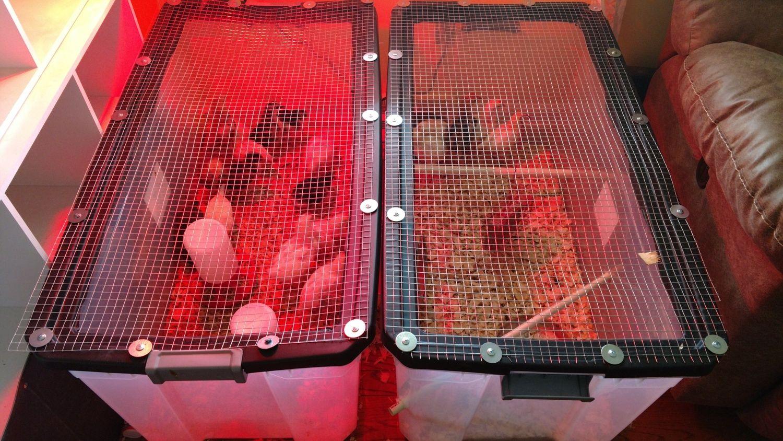 These chicks LOVE their DIY brooder