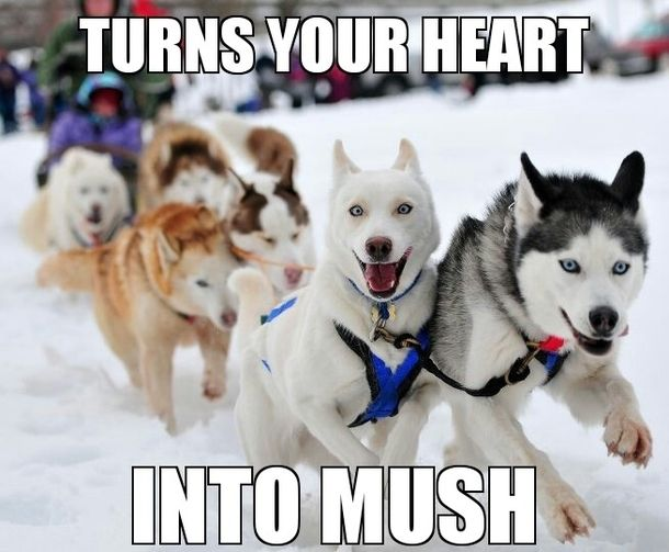 turns your heart into mush.jpg