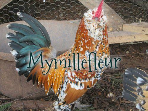 mymilliefleur