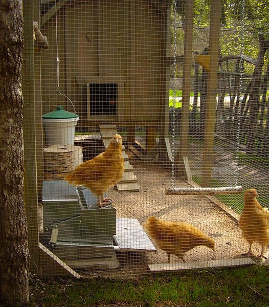 Time-traveling couple with chickens in New Hampshire