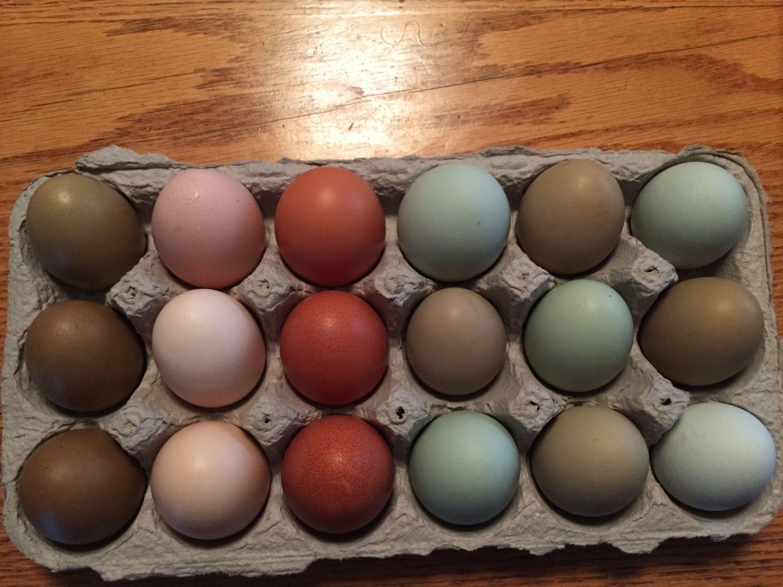 I wish somebody made 3X3 egg cartons!