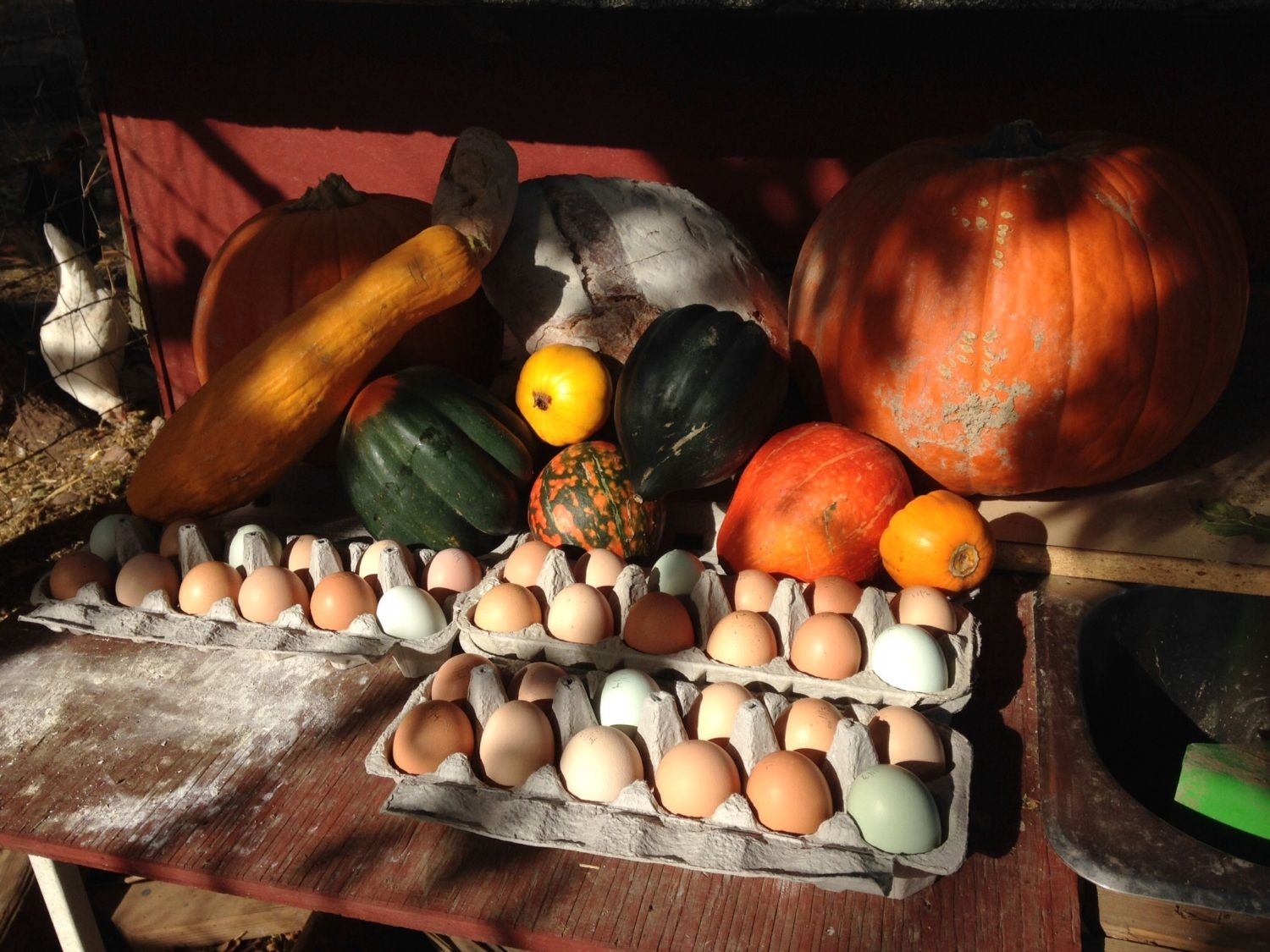 Fall 2014 - from the farm