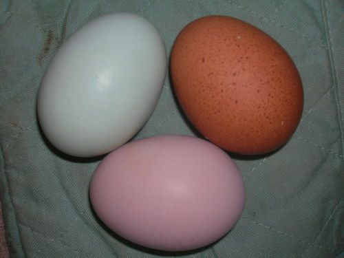 Green Pink Terra Cotta eggs.jpg