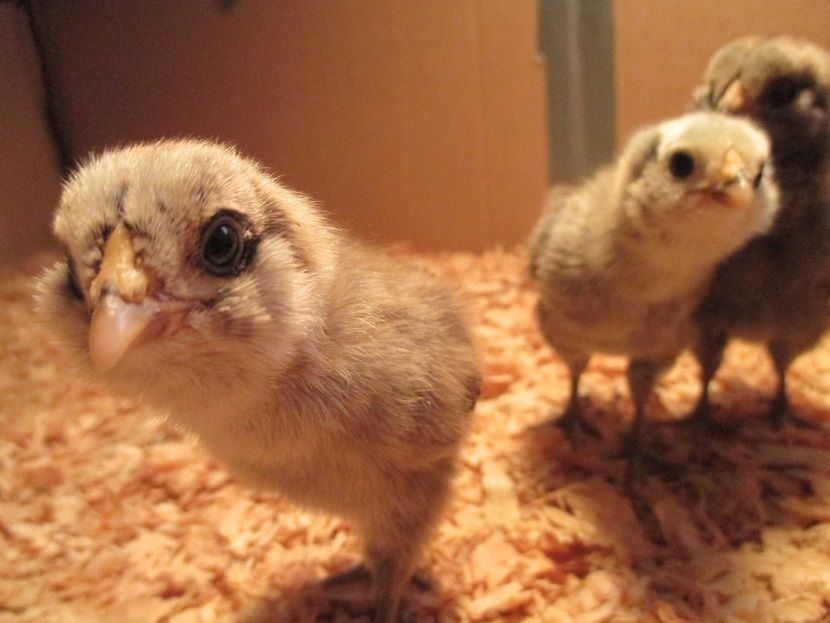 Eggsakly