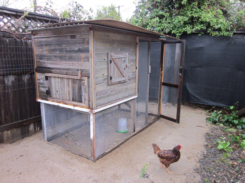 3-31-2012 Chickens 014.JPG
