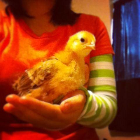 ChickFuentes