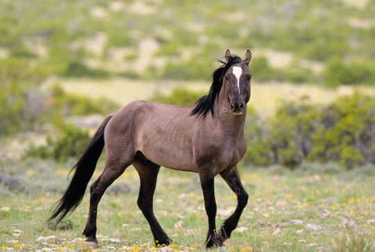 RrAaZz's photos in Anyone up for a wild horse RP game?