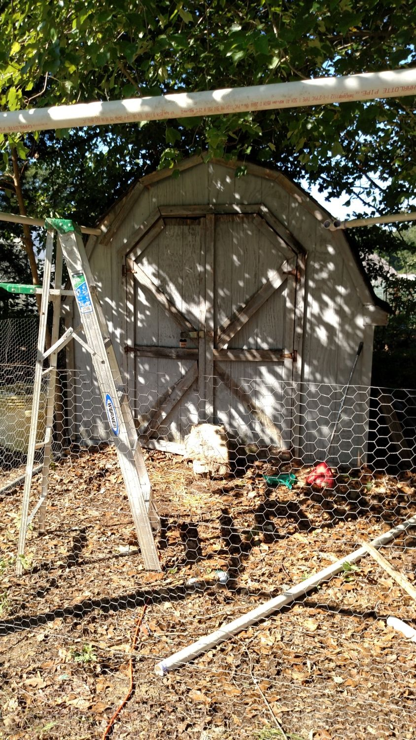 Shed in the process if conversion to a coop. 8/22/15