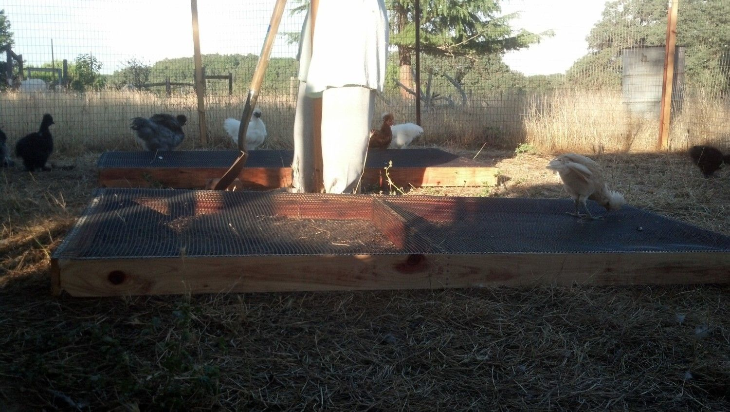 Maligator's photos in ** GRAZING FRAME/BOX! Salad bar for chickens! (DIY video!) **