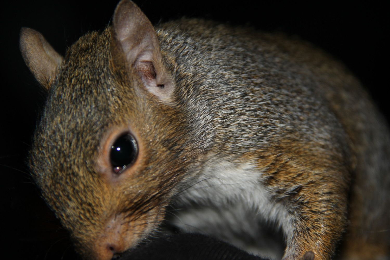 Squirrels NOV 14 008.JPG