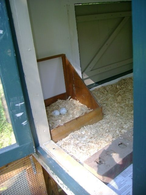 nest box and door 2.JPG