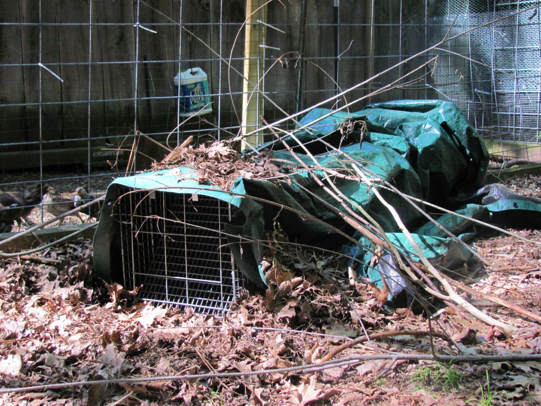 fox trap.JPG