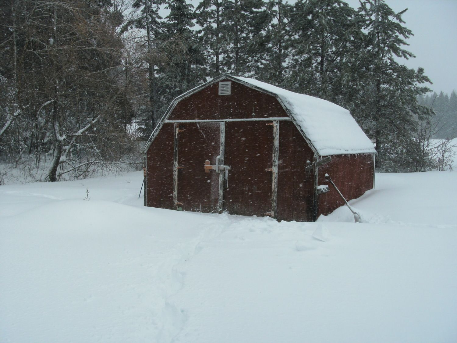 Picture of blustery day outside the loft (baby barn) on December 28th 2012.