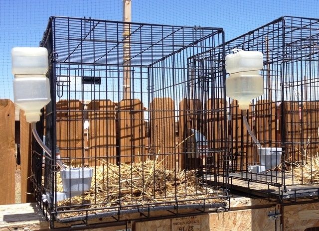 wsmith's photos in Cage Waterer