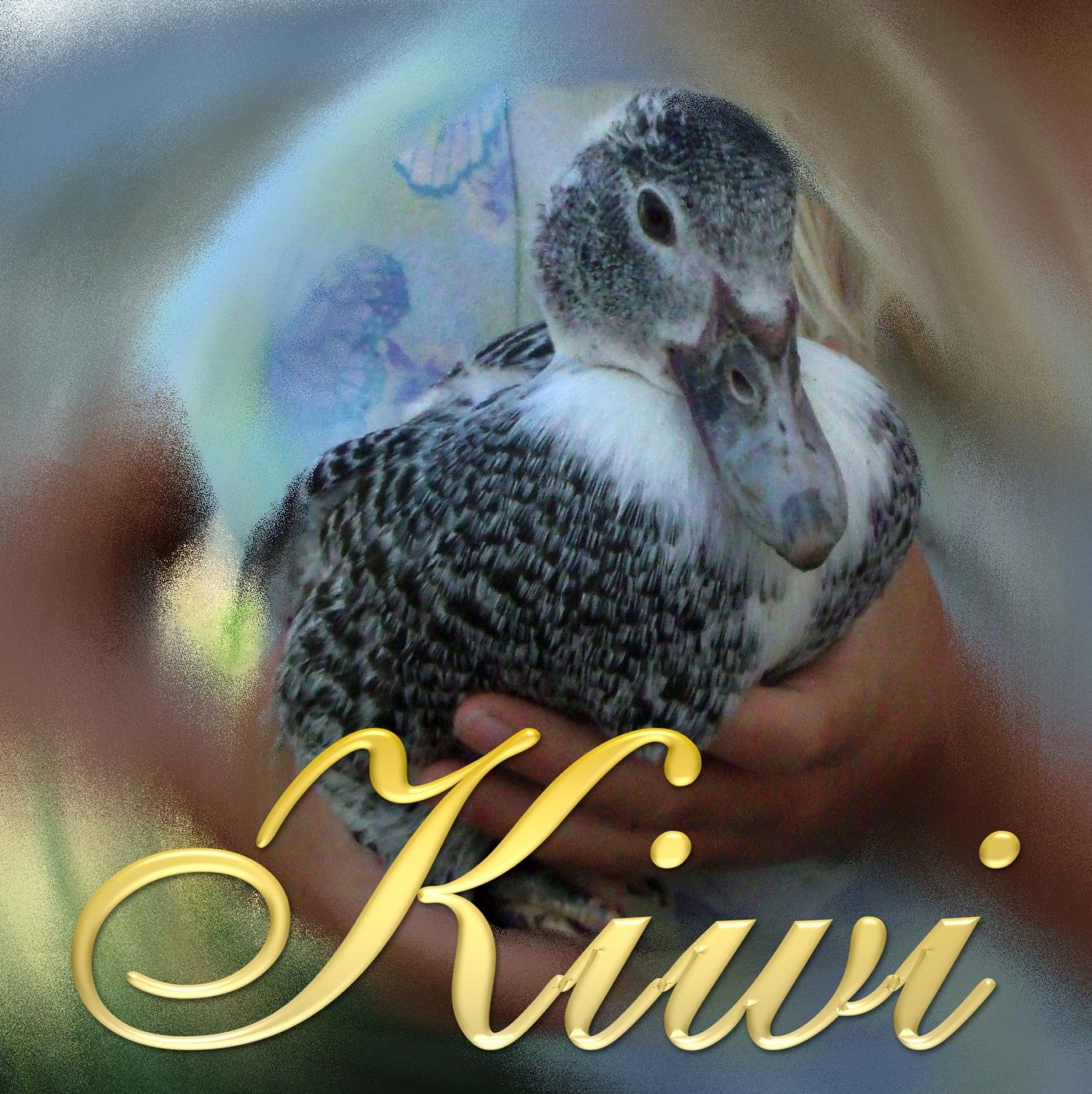 Kiwi, the sweetie who left this life on May 14, 2015. Fortunately her daughter, Lucky, looks just like her, and so does Kiwi Junior.