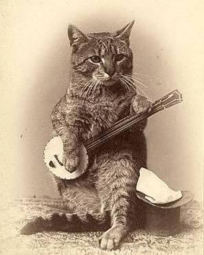 Banjo Cat.jpg