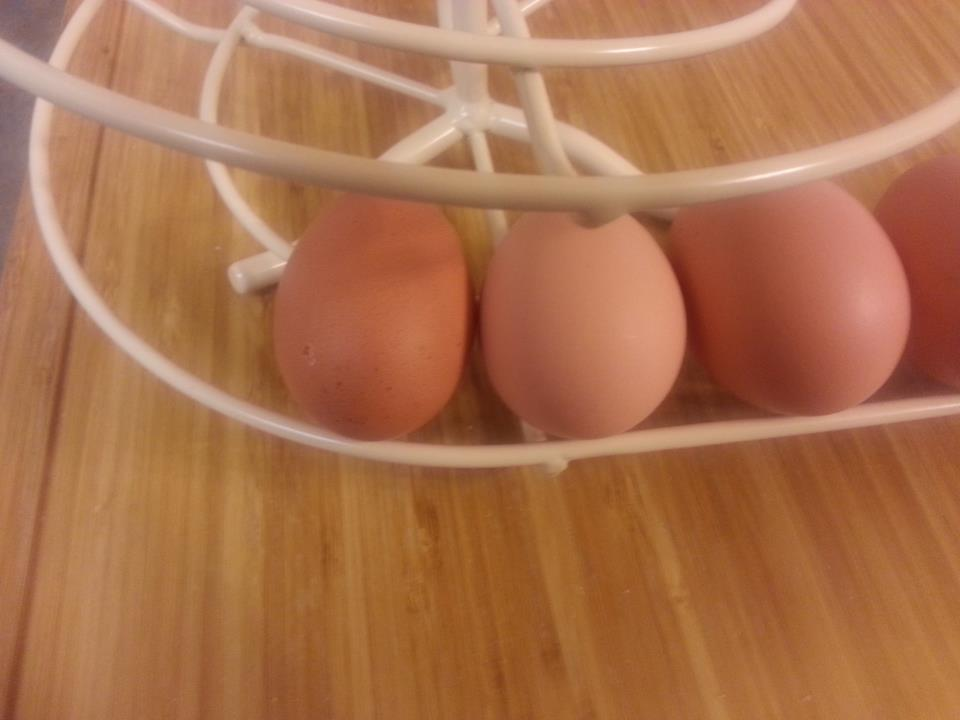 theotherfoote's photos in Cuckoo Marans eggs ' how dark?