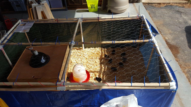 PVC brooder build