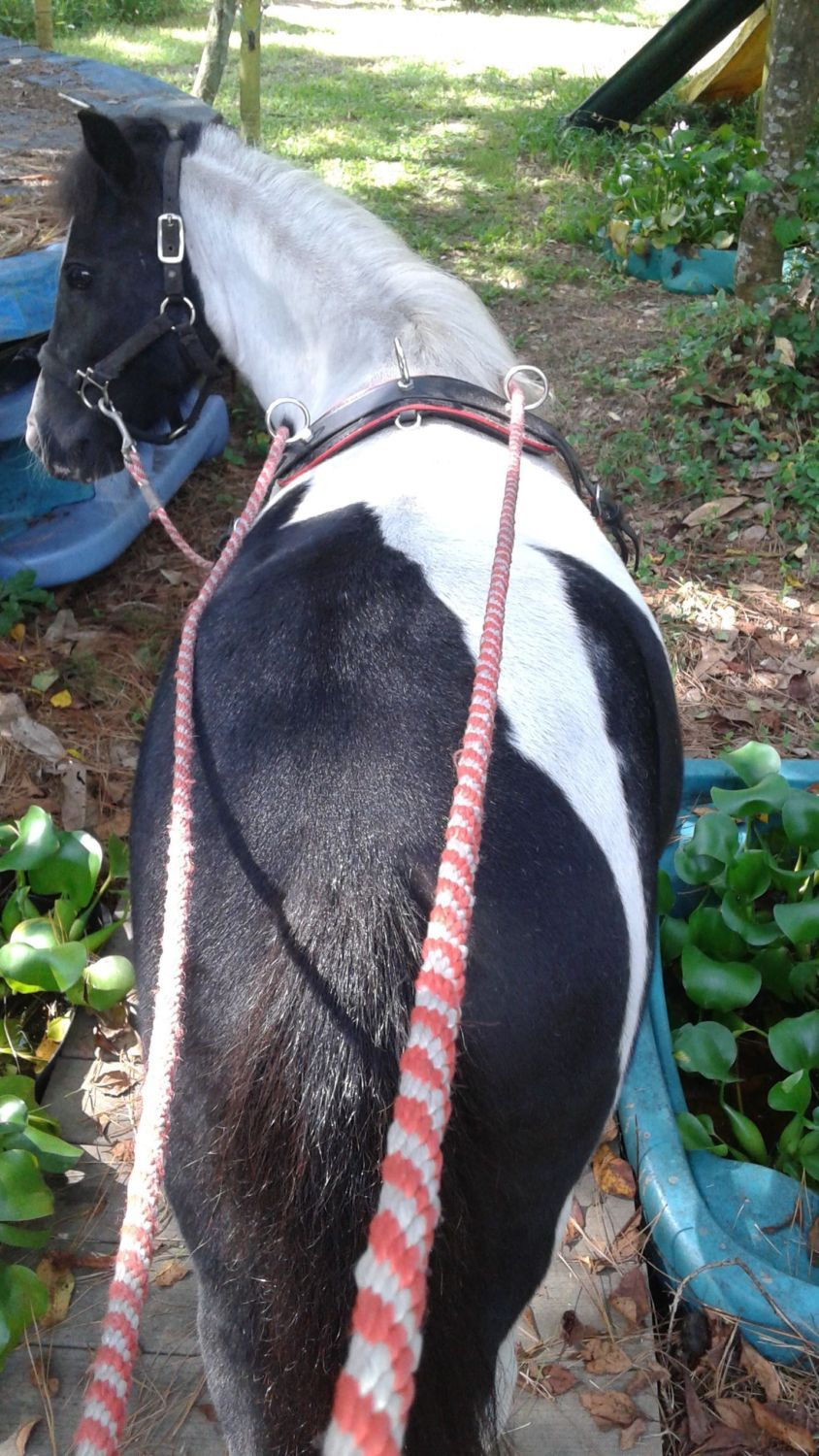 Bunnylady's photos in Horse trying to kill other animals
