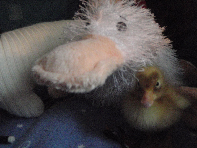 Duckie is here! 012.JPG