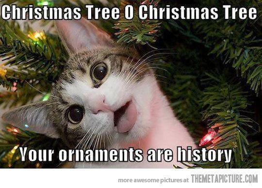 Funny-Christmas-Cat-021.jpg
