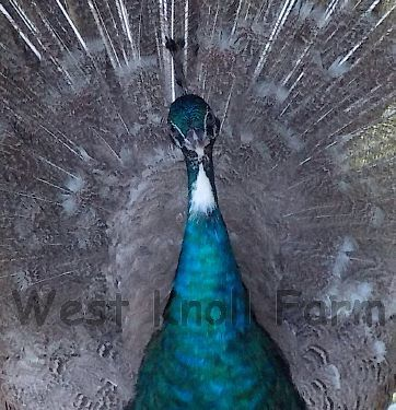 WestKnollAmy profile picture