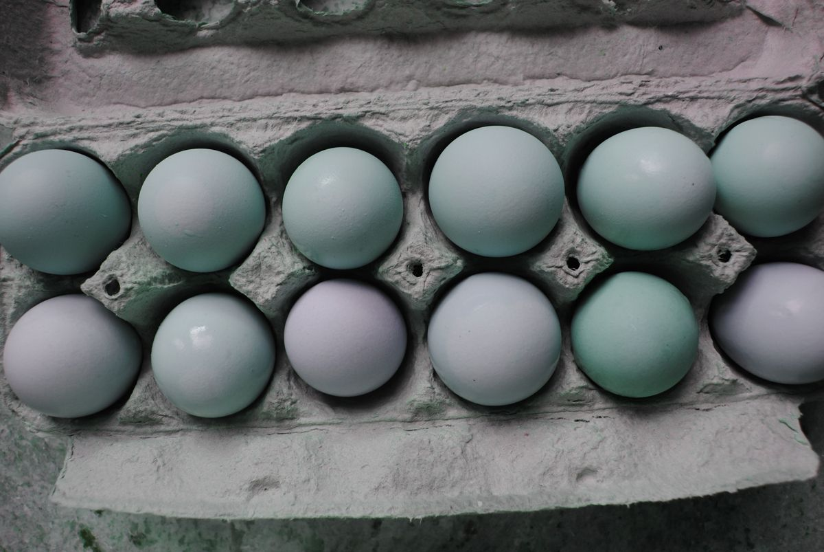 ChickenOfTheC's photos in Questions about auto egg turner