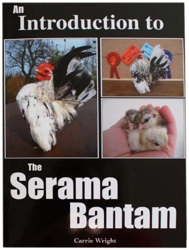 An Introduction to the Serama Bantam
