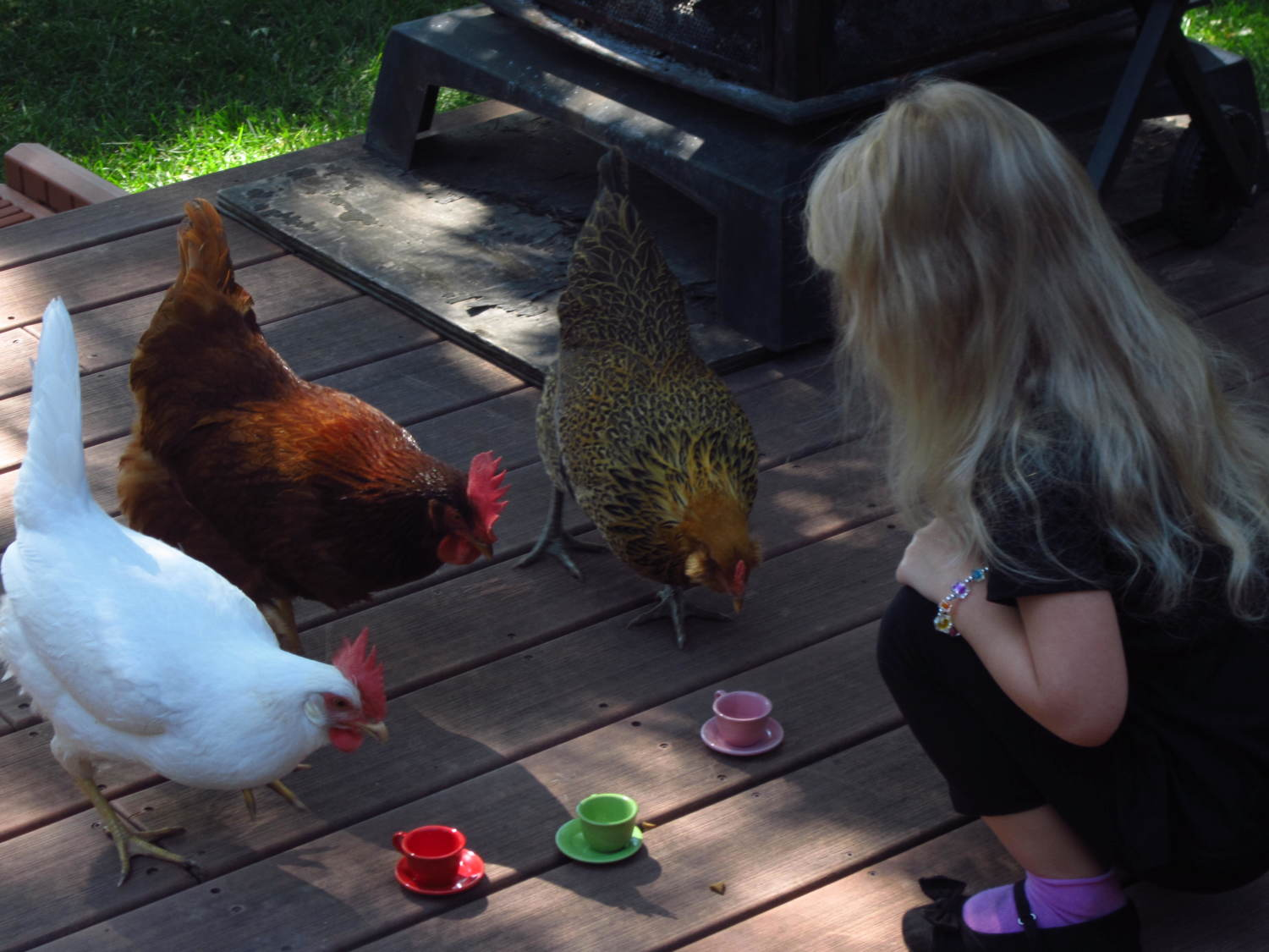 My boyfriends daughter invited the chickens to tea!