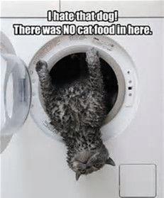 Cat wash 2.jpg