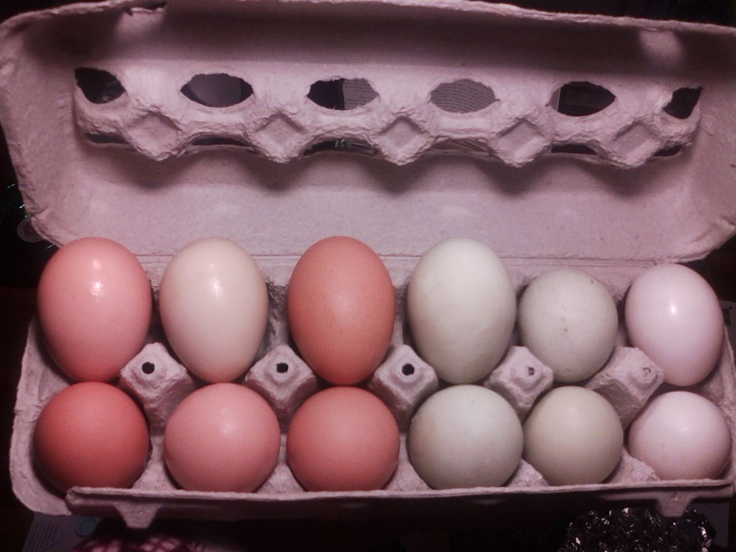 The six on the right are duck eggs.  Left side is Cinnamon, the round ones are from Little Pea (is that why they are round?) and the white ones are from Thunder.  The six on the left are hen eggs.